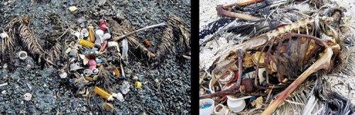 WGP_Plastic_Birds